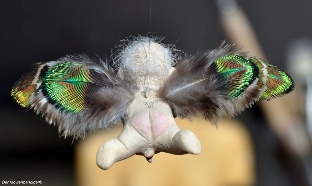 Morpho maskuliensis lüchowensa