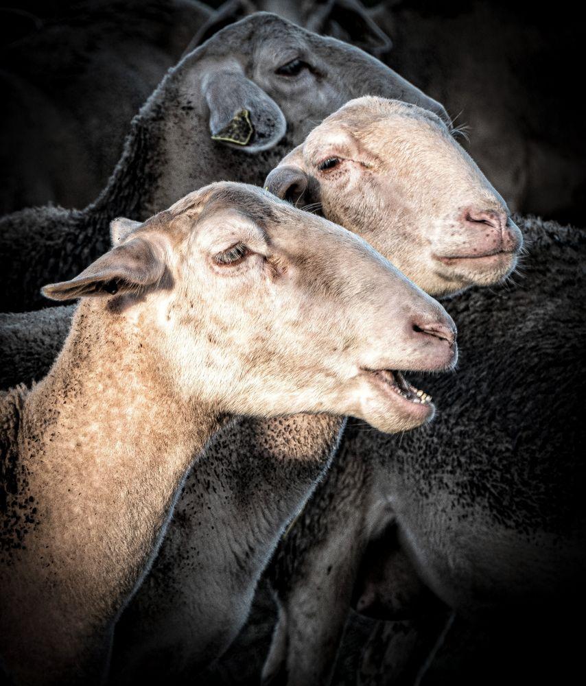 """""""Mort aux vaches""""!!!!"""