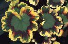 Mosaik-Blätter