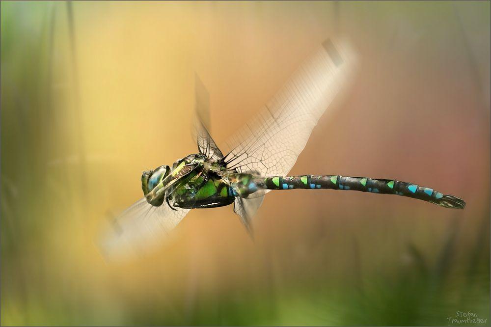 mosaikjunger_fly2