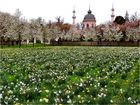 Moschee im Blütenkleid