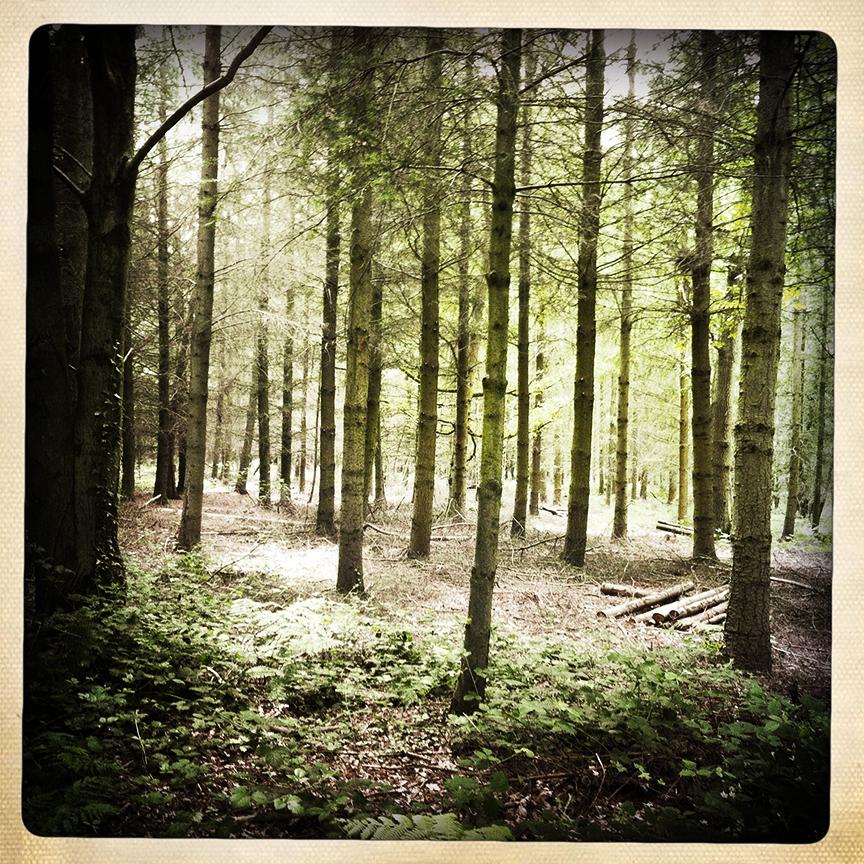 Mose woodland