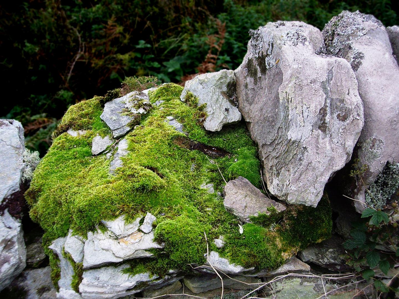 Moss in Kintyre
