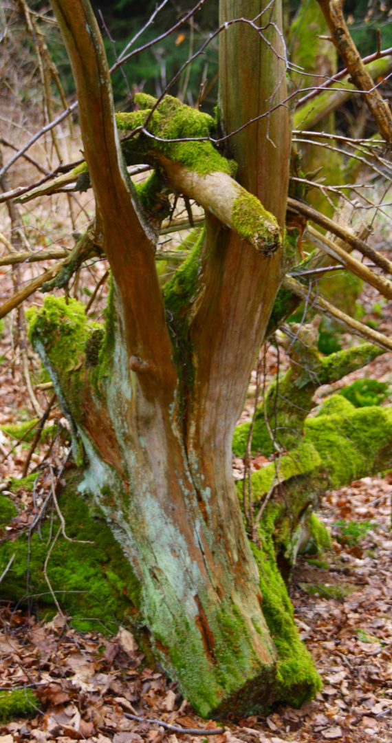 Moss on Wood 2