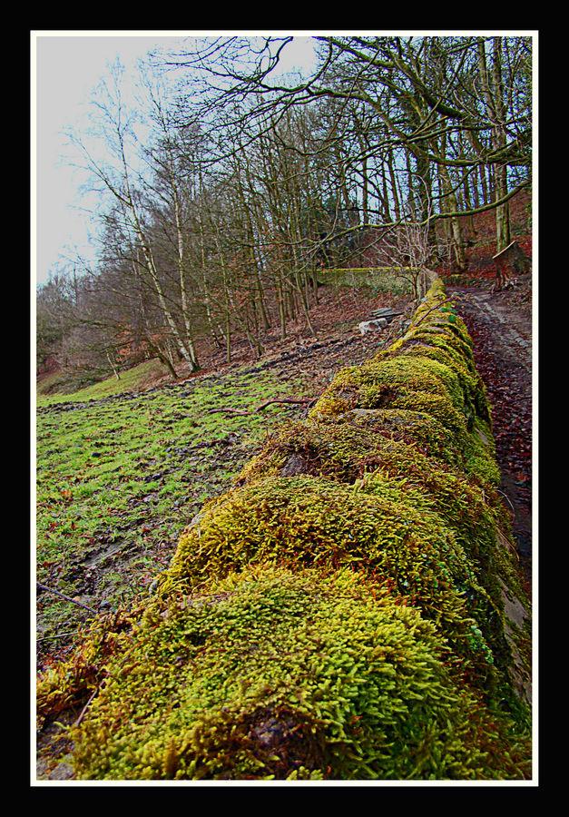 Moss Way