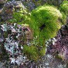 Mosses on tree