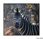 Mostra online di Enrico Maioli: La mia Africa - 5. Il disegno perfetto