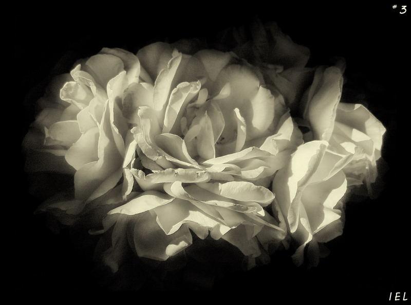 "Mostra online di Irene Ester Leo - ""Essence de Rose"" - 3."
