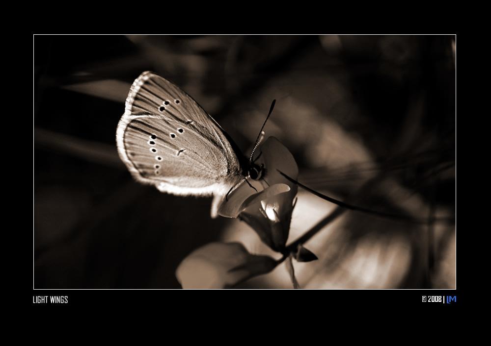 """Mostra online di Luisa Mantero """"Attimi di luce"""" - 7. Light Wings"""