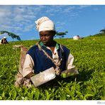 """Mostra online di Marco Giustiniani """"Malawi, sulle colline del tè"""" - 2. Work!"""