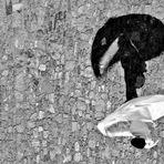 """Mostra online Lorenza Ceruti: """"Le effimere nella fortezza"""" - 5."""