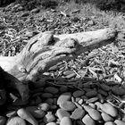 Mostro di legno