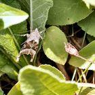 Moth in my Garden..!