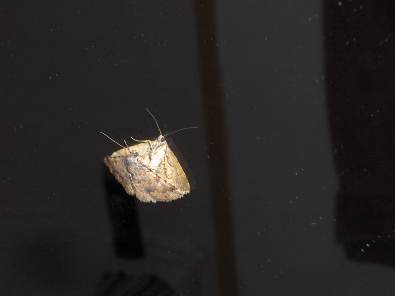 Moth, moth on the wall...