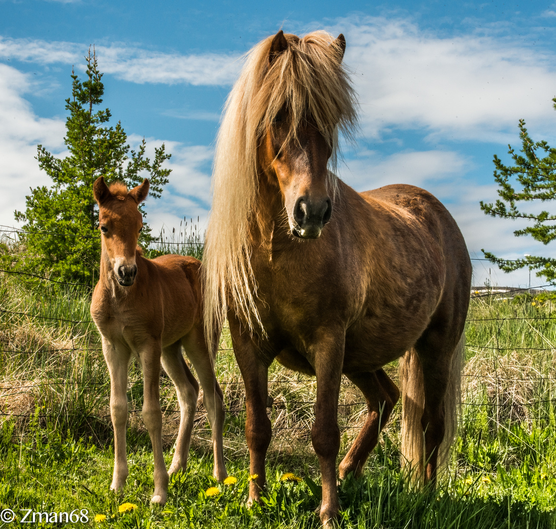 Mother and One Week Old Pony 02