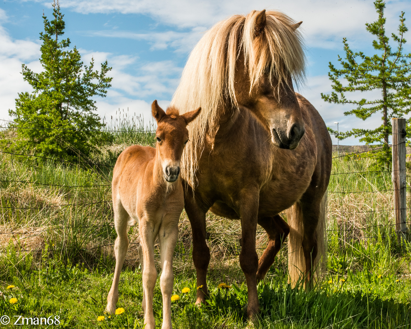 Mother and One Week Old Pony