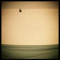 mothman prophecies...