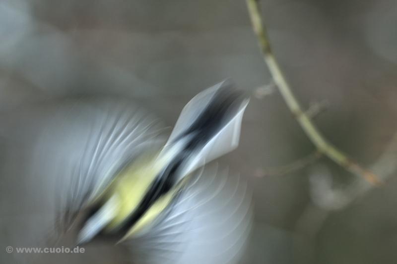 Motion_Blur...