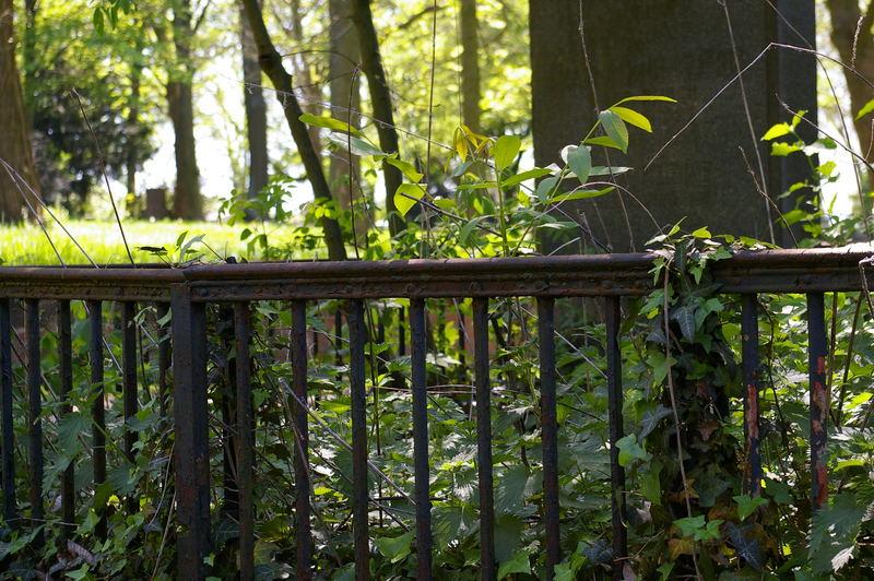 Motiv vom Lindener Bergfriedhof