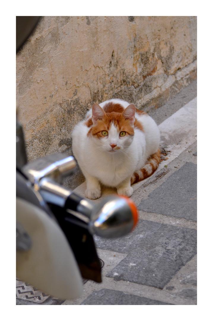 Motorradmieze Foto & Bild | europe, greece, tiere Bilder