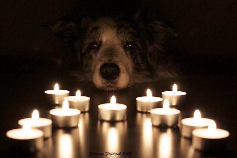 Motte im Kerzenschein