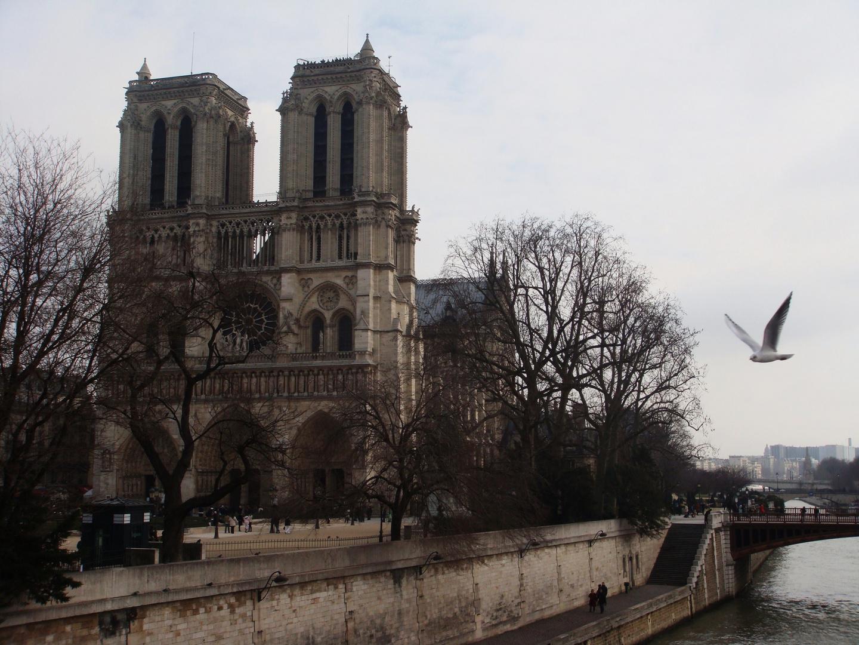 Mouette survolant Notre Dame..