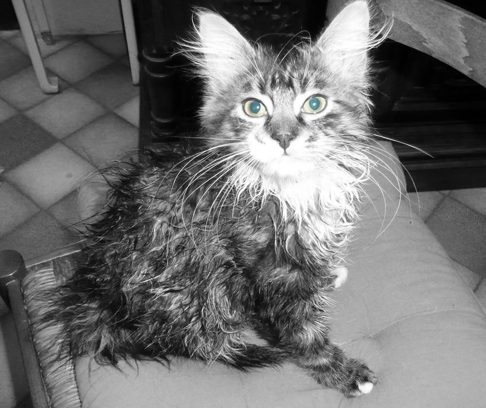 Moufis, mon gremlins