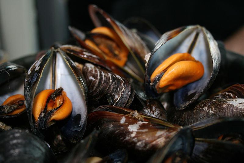 Moules... frisch vom bretonischen Fischer