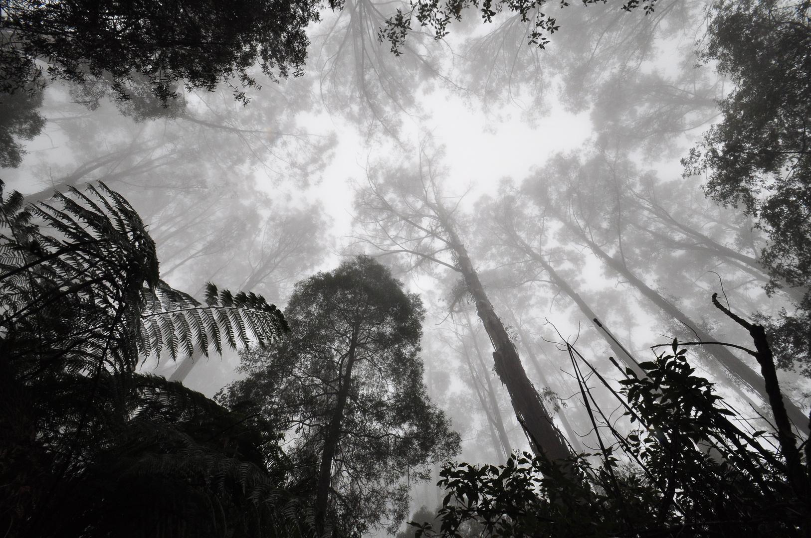 Mount Dandenong Australia