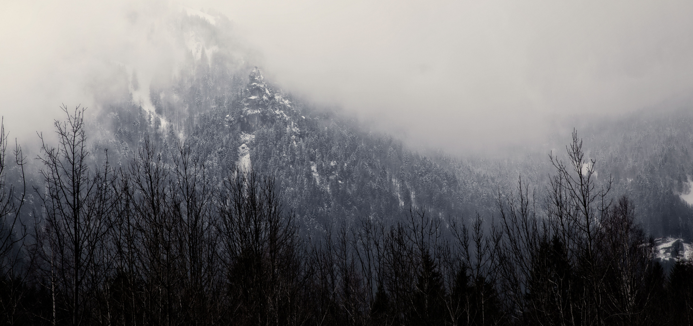 Mountain and Forest