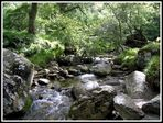 Mountain Stream - Glendalough - Co. Wicklow - Ireland