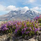 -- Mountain View --