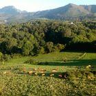 Mountains in Asturias Spain.