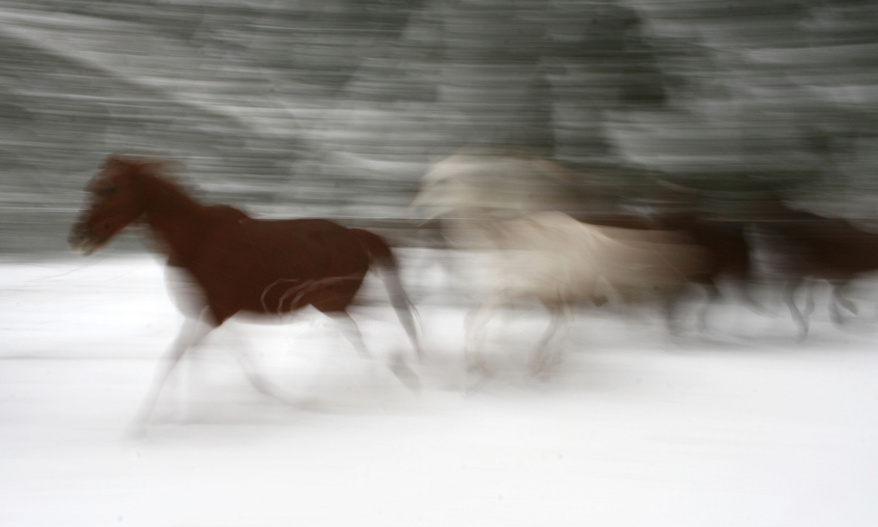 Moving horses
