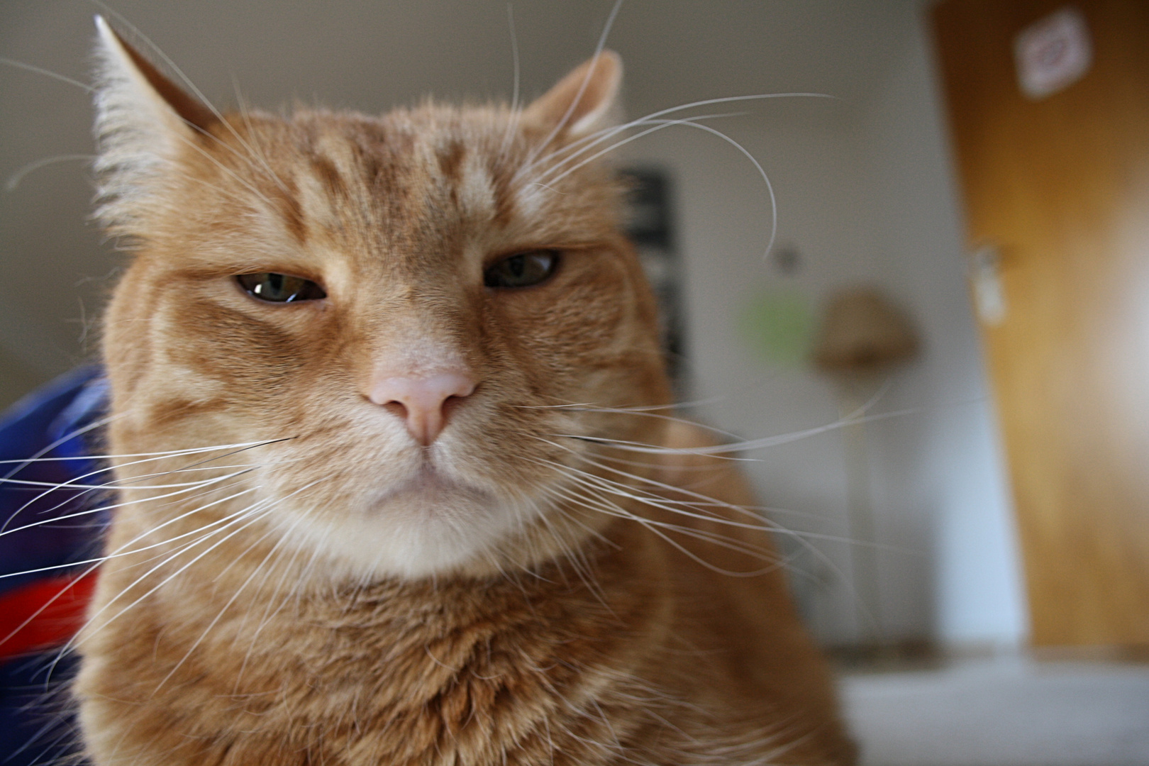 Mr Cat findet das garnicht faszinierend. ;)