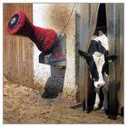 Mr. Cow-Wash