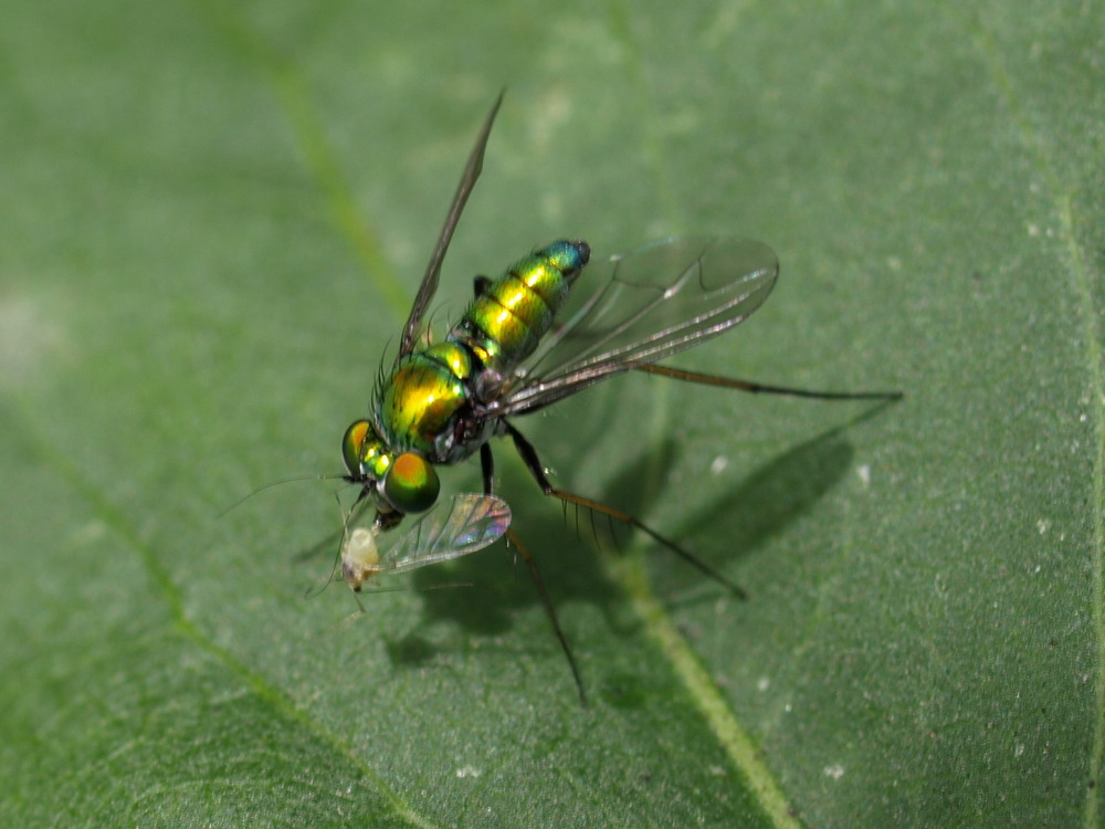 MR FLY'S LUNCHTIME