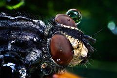 Mr Fly's new eye-glasses