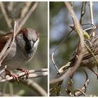 Mr. & Mrs. Sparrow