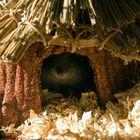 Mr.Whiskers - My Hawaiian Hamster Home