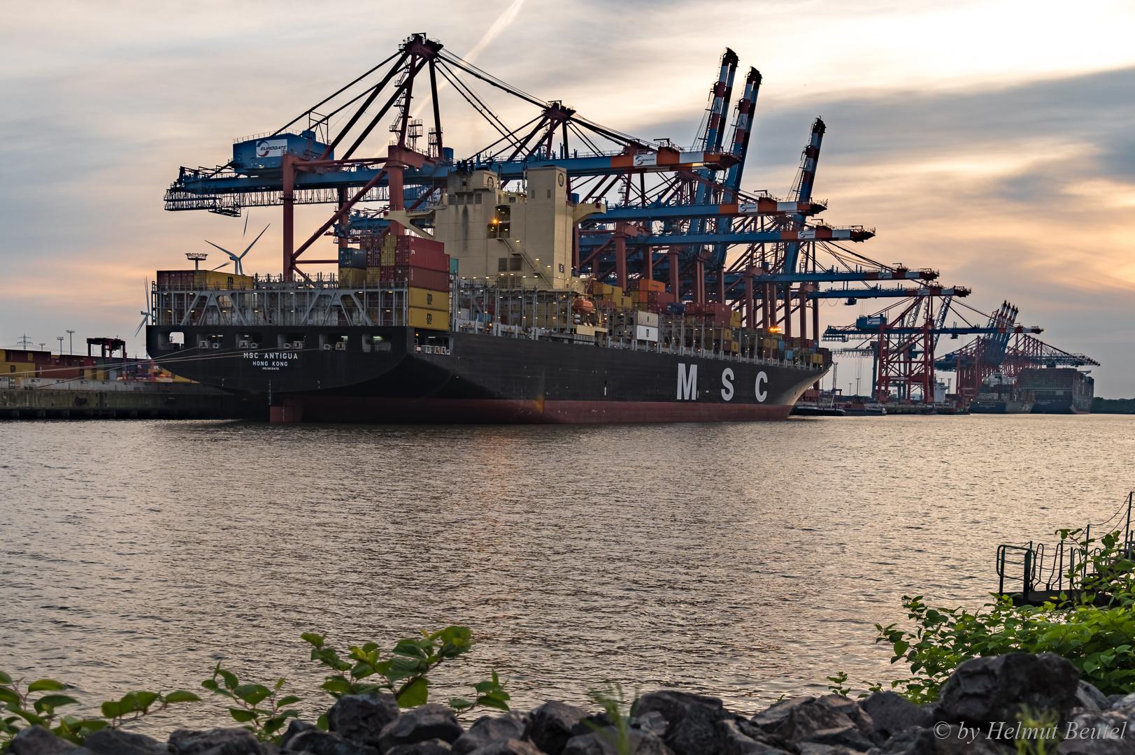 MSC ANTIGUA im Waltershofer Hafen