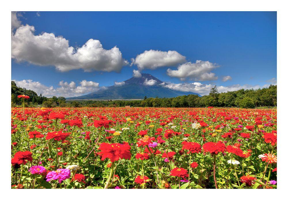 Mt Fuji & Flower garden
