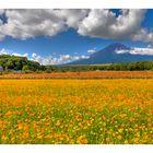 Mt Fuji & Flower garden-II