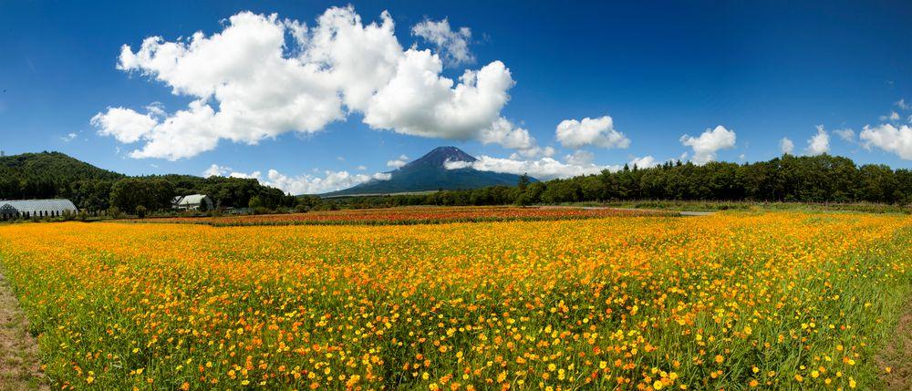 Mt Fuji & Flower garden-III