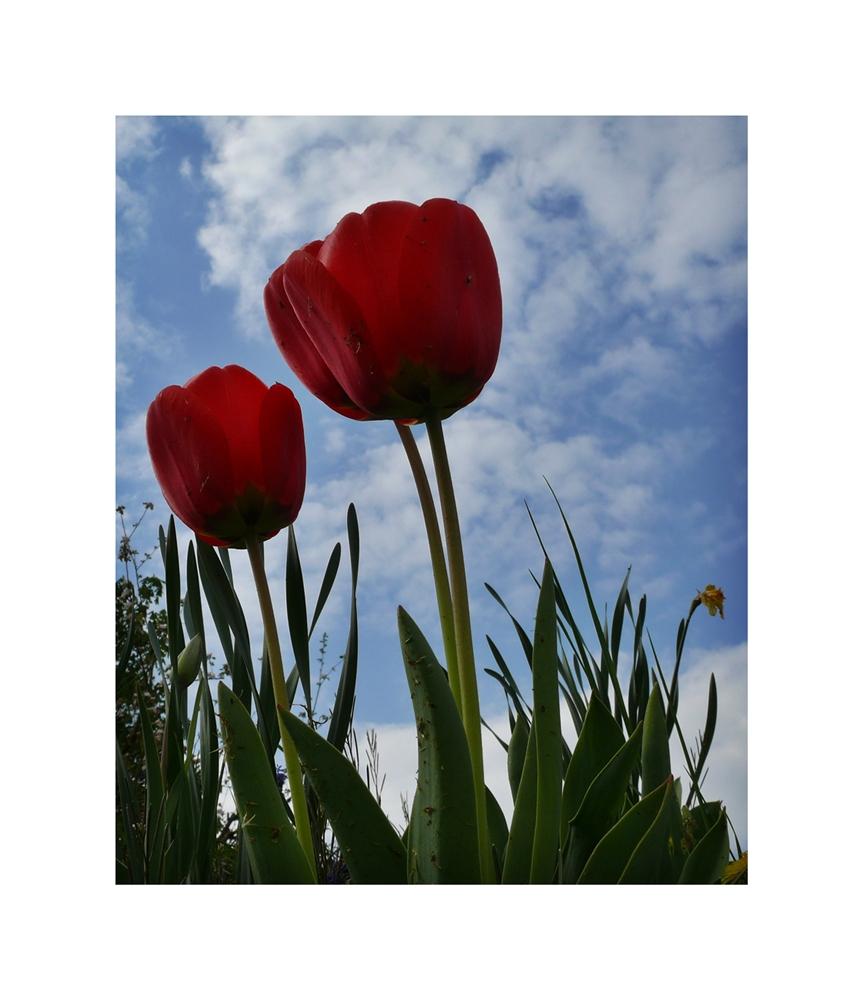 Mttwochsblümchen
