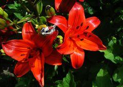 Mttwochsblümchen und Besuch