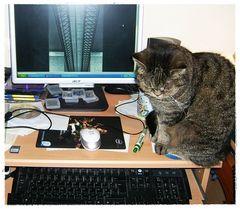 Mucki hilft bei der PC Arbeit
