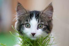 """""""MUCKY"""" vor seinem geliebten Katzengras"""