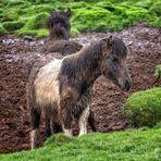 Muddy Horses