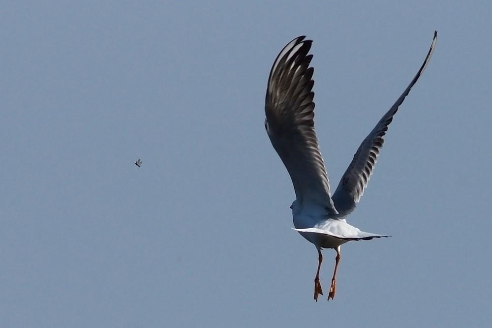 Mucken Fangen Foto Bild Tiere Wildlife Wild Lebende Vogel